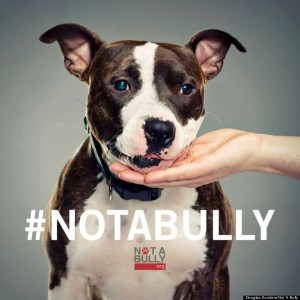h-not-a-bully-768x768
